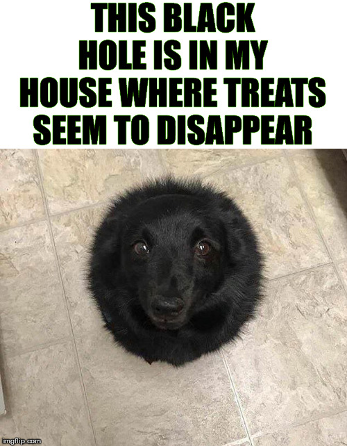 Black hole makes things disappear | THIS BLACK HOLE IS IN MY HOUSE WHERE TREATS SEEM TO DISAPPEAR | image tagged in dogs,black hole,treats,doggo | made w/ Imgflip meme maker