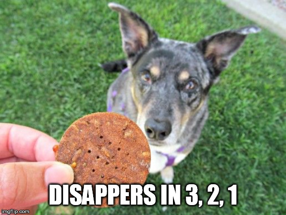 Dog & Treat | DISAPPERS IN 3, 2, 1 | image tagged in dog  treat | made w/ Imgflip meme maker