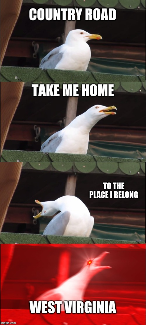 Inhaling Seagull |  COUNTRY ROAD; TAKE ME HOME; TO THE PLACE I BELONG; WEST VIRGINIA | image tagged in memes,inhaling seagull | made w/ Imgflip meme maker