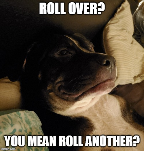Stoner dog |  ROLL OVER? YOU MEAN ROLL ANOTHER? | image tagged in dog,doggo,stoner,stoned | made w/ Imgflip meme maker