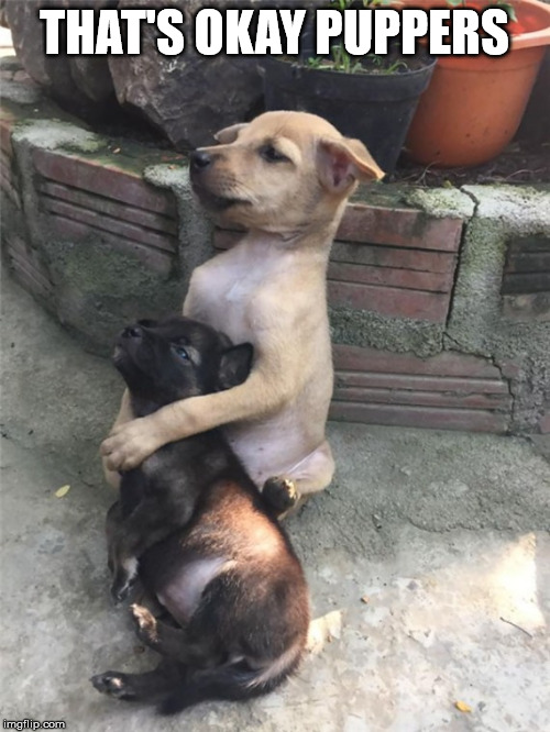 Hugging Dogs | THAT'S OKAY PUPPERS | image tagged in hugging dogs | made w/ Imgflip meme maker
