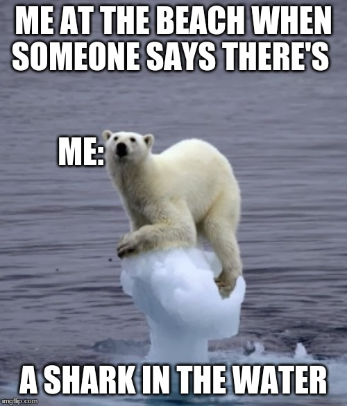 Polar Bear Meme | ME AT THE BEACH WHEN SOMEONE SAYS THERE'S A SHARK IN THE WATER ME: | image tagged in polar bear | made w/ Imgflip meme maker