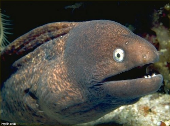 Bad Joke Eel Meme | image tagged in memes,bad joke eel | made w/ Imgflip meme maker