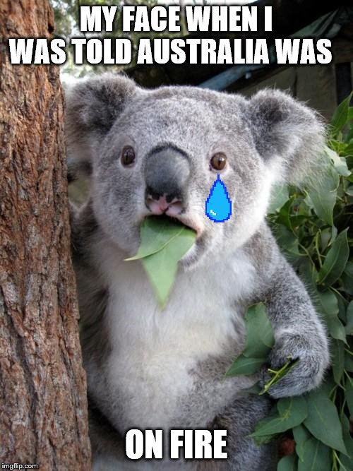 Surprised Koala |  MY FACE WHEN I WAS TOLD AUSTRALIA WAS; ON FIRE | image tagged in memes,surprised koala | made w/ Imgflip meme maker