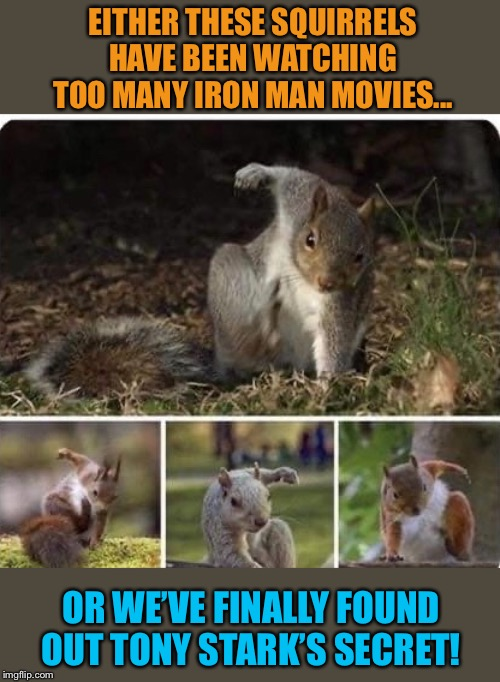 Nuts Landing |  EITHER THESE SQUIRRELS HAVE BEEN WATCHING TOO MANY IRON MAN MOVIES... OR WE'VE FINALLY FOUND OUT TONY STARK'S SECRET! | image tagged in funny,squirrels,iron man,tony stark,funny animals,funny memes | made w/ Imgflip meme maker