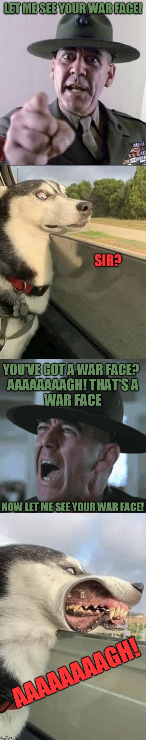Full Metal Dog | LET ME SEE YOUR WAR FACE! SIR? YOU'VE GOT A WAR FACE? AAAAAAAAGH! THAT'S A WAR FACE; NOW LET ME SEE YOUR WAR FACE! AAAAAAAAGH! | image tagged in full metal jacket,movies,dogs,memes,gunnery sergeant hartman,r lee ermey | made w/ Imgflip meme maker
