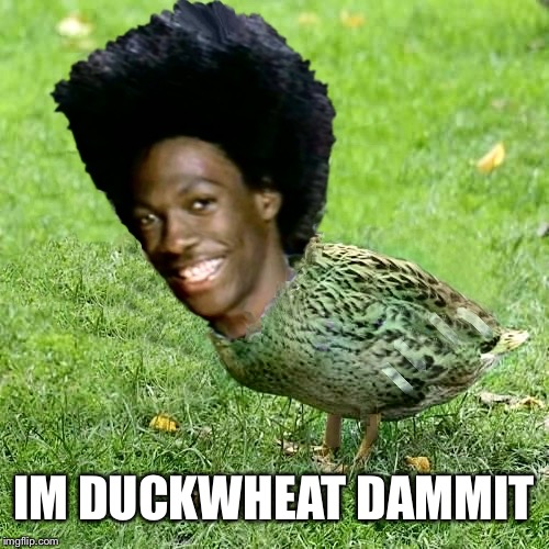 Duckith Wheatith | IM DUCKWHEAT DAMMIT | image tagged in duckith wheatith | made w/ Imgflip meme maker