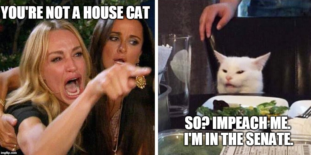 Smudge the cat | YOU'RE NOT A HOUSE CAT SO? IMPEACH ME.       I'M IN THE SENATE. | image tagged in smudge the cat | made w/ Imgflip meme maker