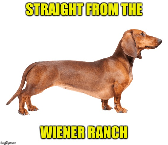 STRAIGHT FROM THE WIENER RANCH | made w/ Imgflip meme maker