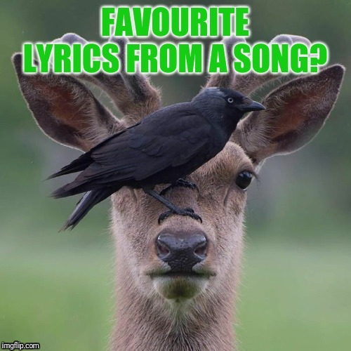 image tagged in lyrics that speak | made w/ Imgflip meme maker
