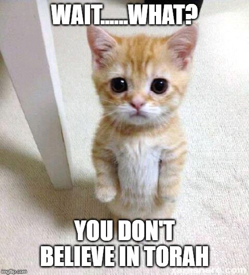 WAIT......WHAT? YOU DON'T BELIEVE IN TORAH | image tagged in funny,cats,religion | made w/ Imgflip meme maker