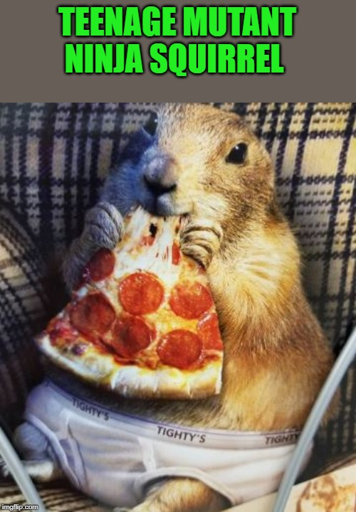 Teenage Mutant Ninja Squirrel | TEENAGE MUTANT NINJA SQUIRREL | image tagged in teenage mutant ninja squirrel,pizza | made w/ Imgflip meme maker