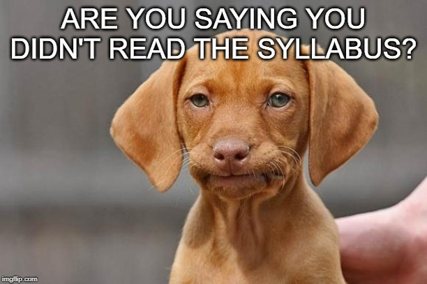 unamused dog | ARE YOU SAYING YOU DIDN'T READ THE SYLLABUS? | image tagged in unamused dog | made w/ Imgflip meme maker