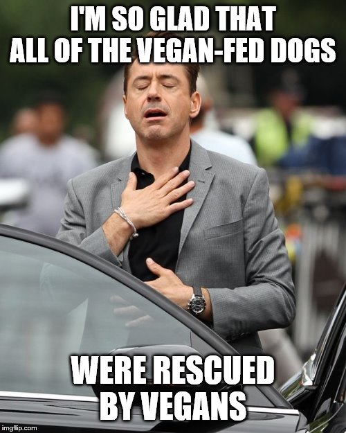 I'M SO GLAD THAT ALL OF THE VEGAN-FED DOGS WERE RESCUED BY VEGANS | image tagged in robert downey jr | made w/ Imgflip meme maker