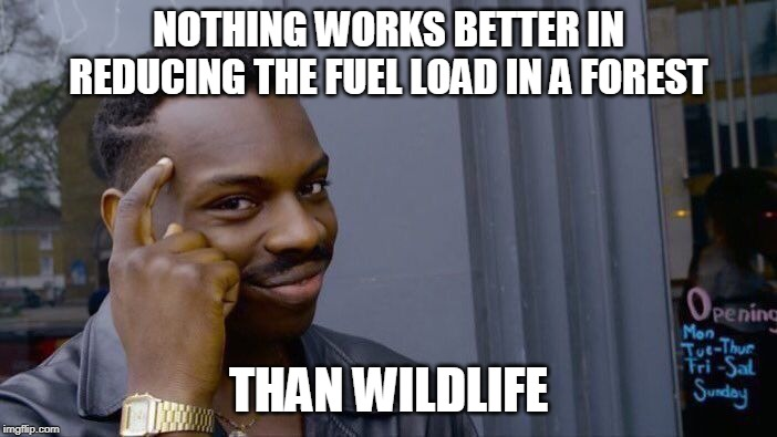 Roll Safe Think About It Meme | NOTHING WORKS BETTER IN REDUCING THE FUEL LOAD IN A FOREST THAN WILDLIFE | image tagged in memes,roll safe think about it | made w/ Imgflip meme maker