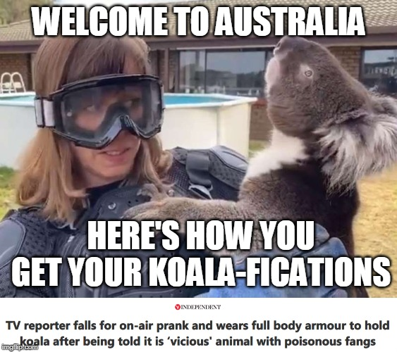 Gotta love them aussies (drop bears, not bombs)! |  WELCOME TO AUSTRALIA; HERE'S HOW YOU GET YOUR KOALA-FICATIONS | image tagged in memes,australia,wildlife,koala,aussie,communication | made w/ Imgflip meme maker