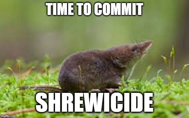 TIME TO COMMIT SHREWICIDE | image tagged in shrewicide | made w/ Imgflip meme maker