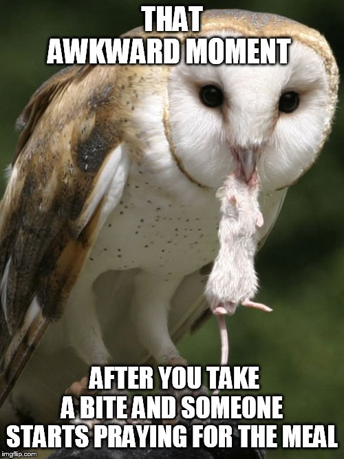 THAT AWKWARD MOMENT AFTER YOU TAKE A BITE AND SOMEONE STARTS PRAYING FOR THE MEAL | image tagged in funny memes,owl,animal,awkward moment | made w/ Imgflip meme maker