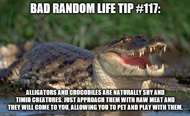 Alligator | BAD RANDOM LIFE TIP #117: ALLIGATORS AND CROCODILES ARE NATURALLY SHY AND TIMID CREATURES. JUST APPROACH THEM WITH RAW MEAT AND THEY WILL CO | image tagged in alligator | made w/ Imgflip meme maker