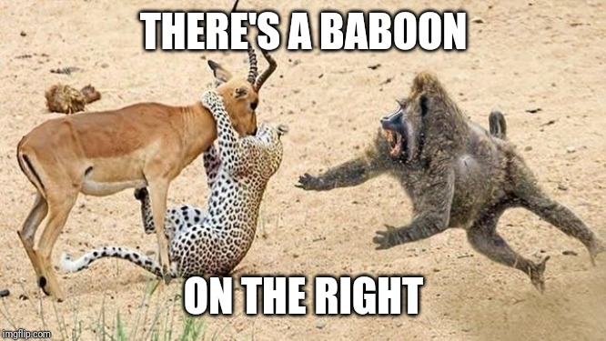 I see a Baboon rising | THERE'S A BABOON ON THE RIGHT | image tagged in baboon,bad pun,puns | made w/ Imgflip meme maker