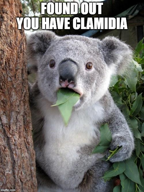 Surprised Koala Meme | FOUND OUT YOU HAVE CLAMIDIA | image tagged in memes,surprised koala | made w/ Imgflip meme maker