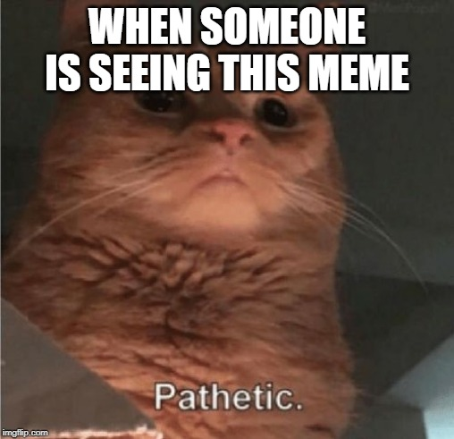 Pathetic Cat |  WHEN SOMEONE IS SEEING THIS MEME | image tagged in pathetic cat | made w/ Imgflip meme maker
