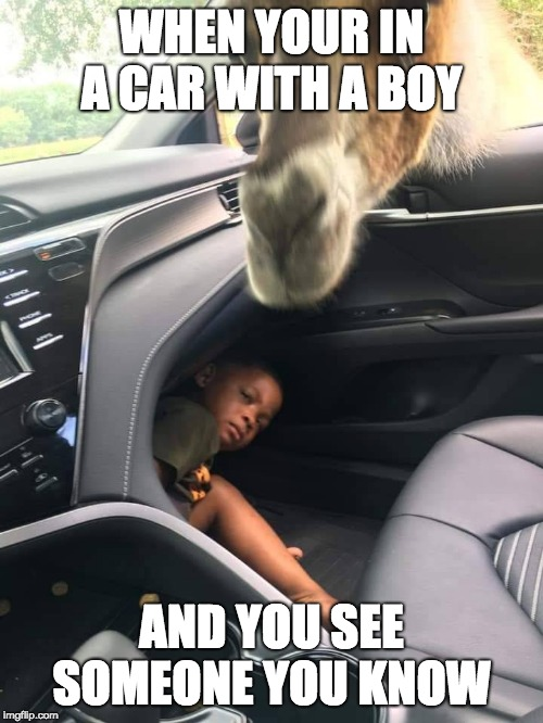 WHEN YOUR IN A CAR WITH A BOY AND YOU SEE SOMEONE YOU KNOW | image tagged in boy hiding from giraffe | made w/ Imgflip meme maker