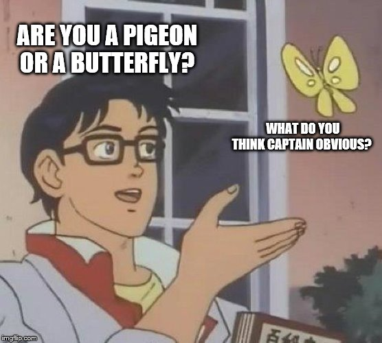 Is This A Pigeon |  ARE YOU A PIGEON OR A BUTTERFLY? WHAT DO YOU THINK CAPTAIN OBVIOUS? | image tagged in memes,is this a pigeon | made w/ Imgflip meme maker
