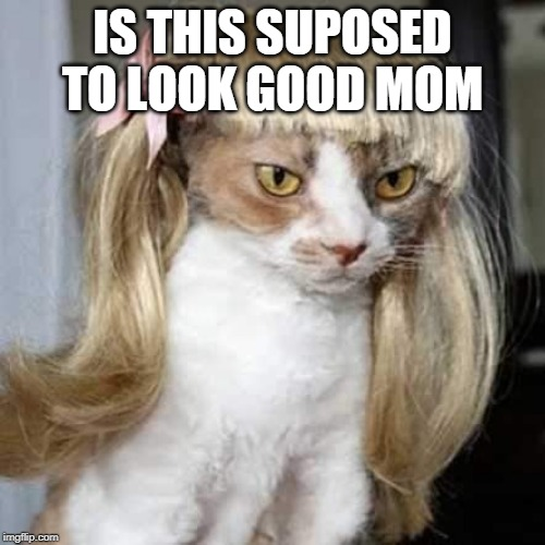 cat wigs |  IS THIS SUPOSED TO LOOK GOOD MOM | image tagged in cat,wig | made w/ Imgflip meme maker