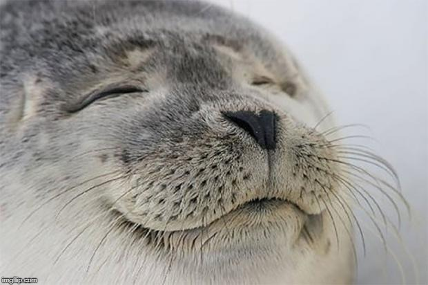 Satisfied Seal Meme | image tagged in memes,satisfied seal | made w/ Imgflip meme maker