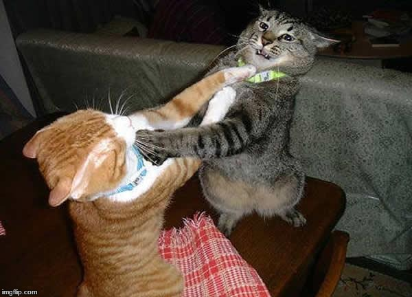 image tagged in two cats fighting for real | made w/ Imgflip meme maker