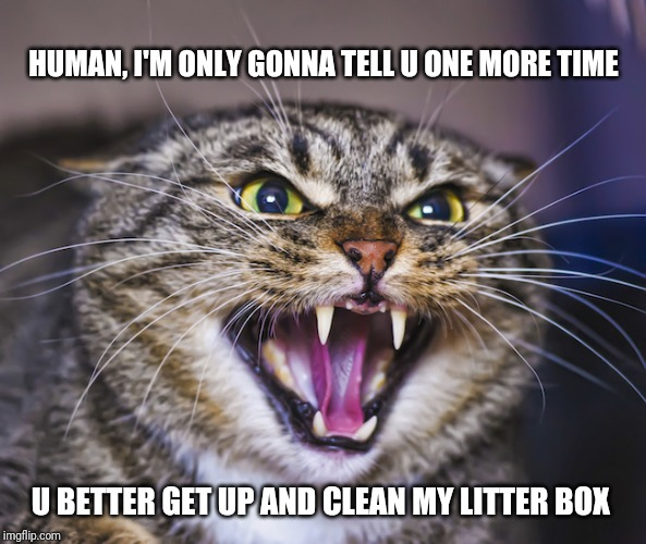 Angry Cat |  HUMAN, I'M ONLY GONNA TELL U ONE MORE TIME; U BETTER GET UP AND CLEAN MY LITTER BOX | image tagged in angry cat,memes,cats,cat memes,funny | made w/ Imgflip meme maker