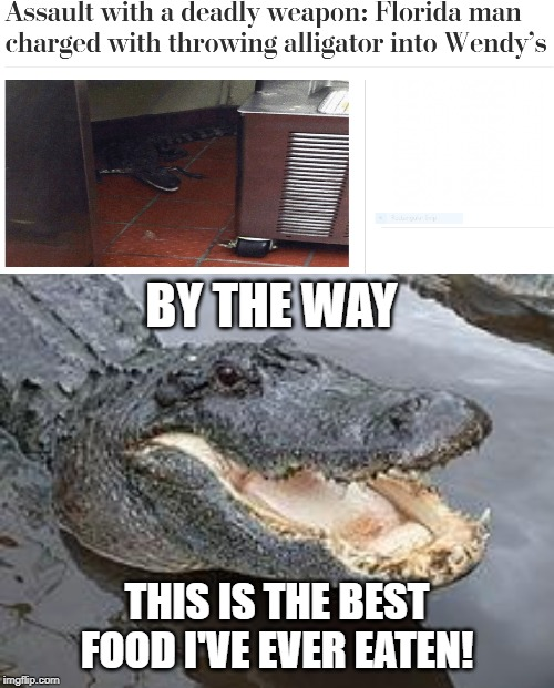 Alligator is deadly |  BY THE WAY; THIS IS THE BEST FOOD I'VE EVER EATEN! | image tagged in alligator wut,food,wendy's,funny,memes,florida man | made w/ Imgflip meme maker