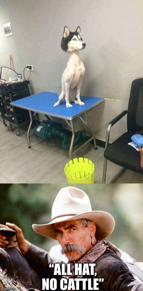 """ALL HAT, NO CATTLE"" 