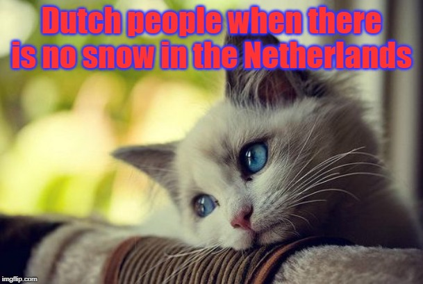 First World Problems Cat |  Dutch people when there is no snow in the Netherlands | image tagged in memes,first world problems cat | made w/ Imgflip meme maker