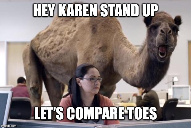 Camel | HEY KAREN STAND UP LET'S COMPARE TOES | image tagged in camel | made w/ Imgflip meme maker