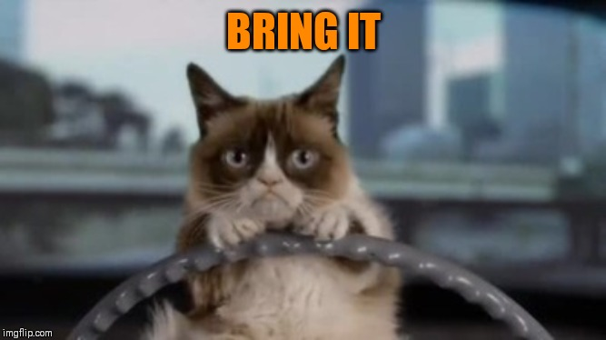Grumpy cat driving | BRING IT | image tagged in grumpy cat driving | made w/ Imgflip meme maker