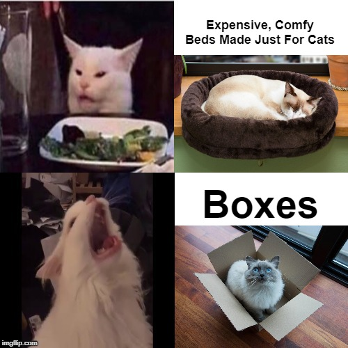 You know it's true |  Expensive, Comfy Beds Made Just For Cats; Boxes | image tagged in cat feline bling,cats,boxes,bed,so true memes | made w/ Imgflip meme maker