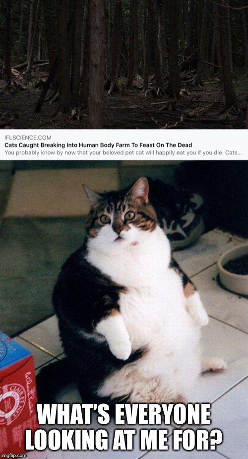WHAT'S EVERYONE LOOKING AT ME FOR? | image tagged in fat cat,cats,cat memes,i love cats,memes,funny | made w/ Imgflip meme maker