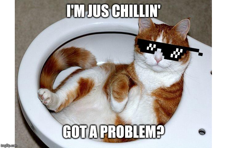 cats funny cat memes Memes & GIFs - Imgflip