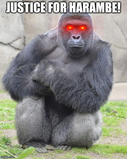 Harambe | JUSTICE FOR HARAMBE! | image tagged in harambe | made w/ Imgflip meme maker