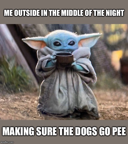 ME OUTSIDE IN THE MIDDLE OF THE NIGHT; MAKING SURE THE DOGS GO PEE | image tagged in baby yoda,dogs | made w/ Imgflip meme maker
