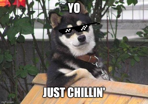 Cool dog | YO JUST CHILLIN' | image tagged in cool dog | made w/ Imgflip meme maker