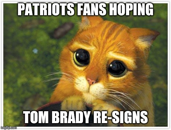 Shrek Cat | PATRIOTS FANS HOPING TOM BRADY RE-SIGNS | image tagged in memes,shrek cat | made w/ Imgflip meme maker