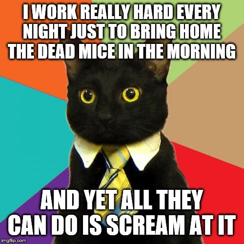 Sometime the wife doesn't understand my pain at all Though as long as she lets me bath myself in public I'll try to not complain | I WORK REALLY HARD EVERY NIGHT JUST TO BRING HOME THE DEAD MICE IN THE MORNING AND YET ALL THEY CAN DO IS SCREAM AT IT | image tagged in memes,business cat | made w/ Imgflip meme maker