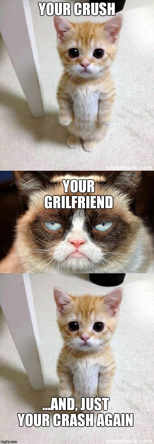Image tagged in memes,cute cat,grumpy cat not amused - Imgflip