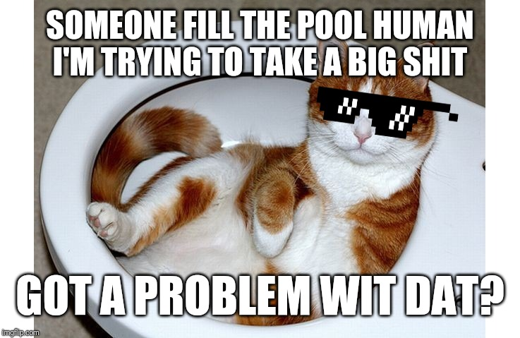 Funny Cat |  SOMEONE FILL THE POOL HUMAN I'M TRYING TO TAKE A BIG SHIT; GOT A PROBLEM WIT DAT? | image tagged in funny cat,memes,cats,funny cat memes,dank memes,funny | made w/ Imgflip meme maker