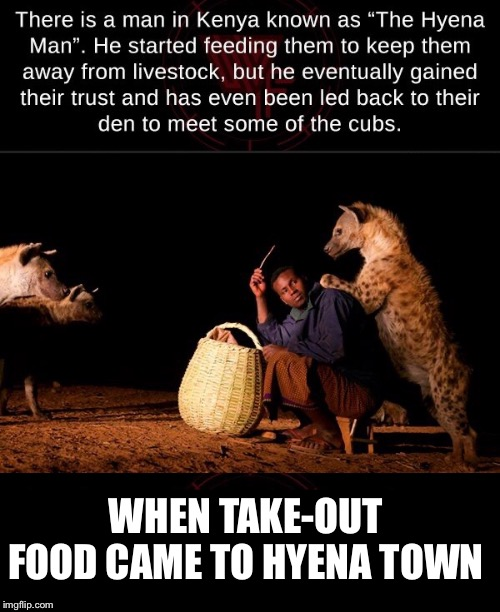 Who's laughing now? | WHEN TAKE-OUT FOOD CAME TO HYENA TOWN | image tagged in hyena,fast food,weird stuff,funny,true story | made w/ Imgflip meme maker