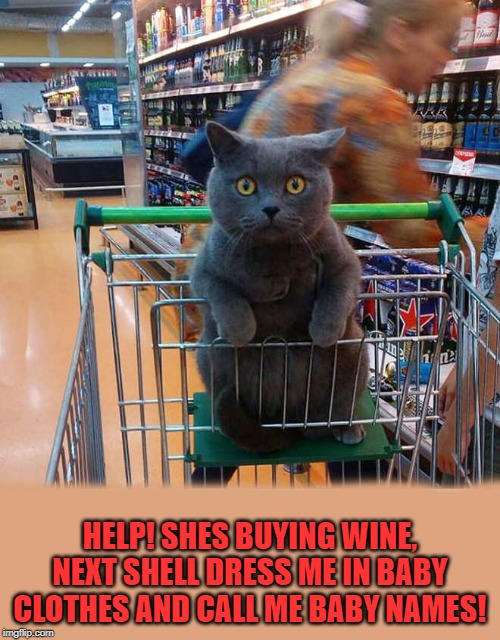 Help! |  HELP! SHES BUYING WINE, NEXT SHELL DRESS ME IN BABY CLOTHES AND CALL ME BABY NAMES! | image tagged in wine,cats,help | made w/ Imgflip meme maker