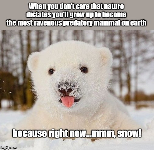 Polar bear cub - Imgflip